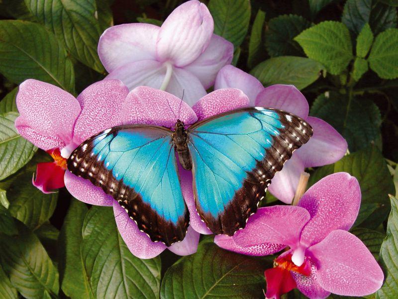 bleuorchidee.jpg