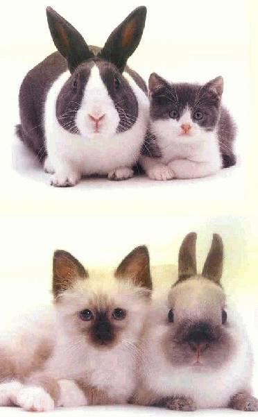 rabbitcat.jpg